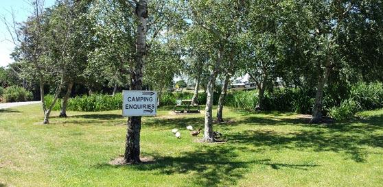campground 4